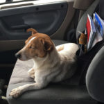 Dog-in-a-Highway