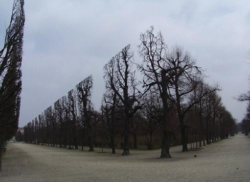 Graphic-Trees