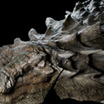 110-Million-Year-Old-Dinosaur-Fossil-1
