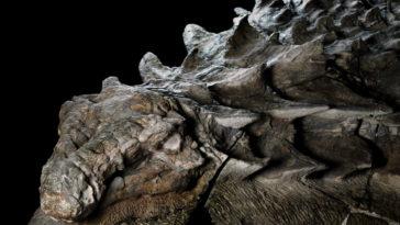 110-Million-Year-Old-Dinosaur-Fossil-1