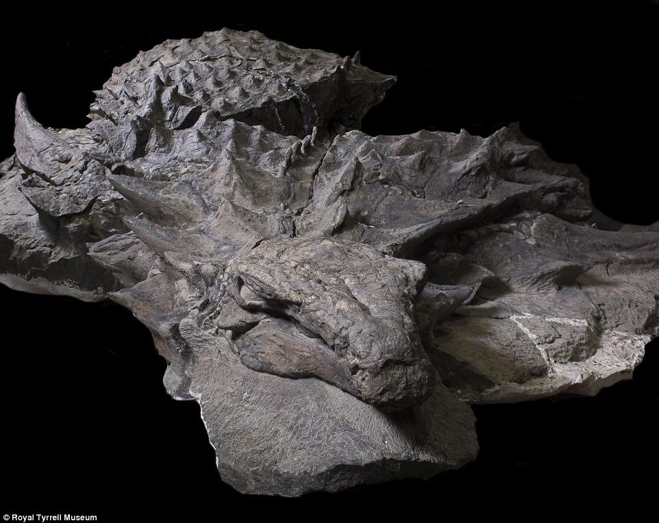 110-Million-Year Old Dinosaur Fossil
