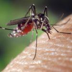 prone to mosquito bite