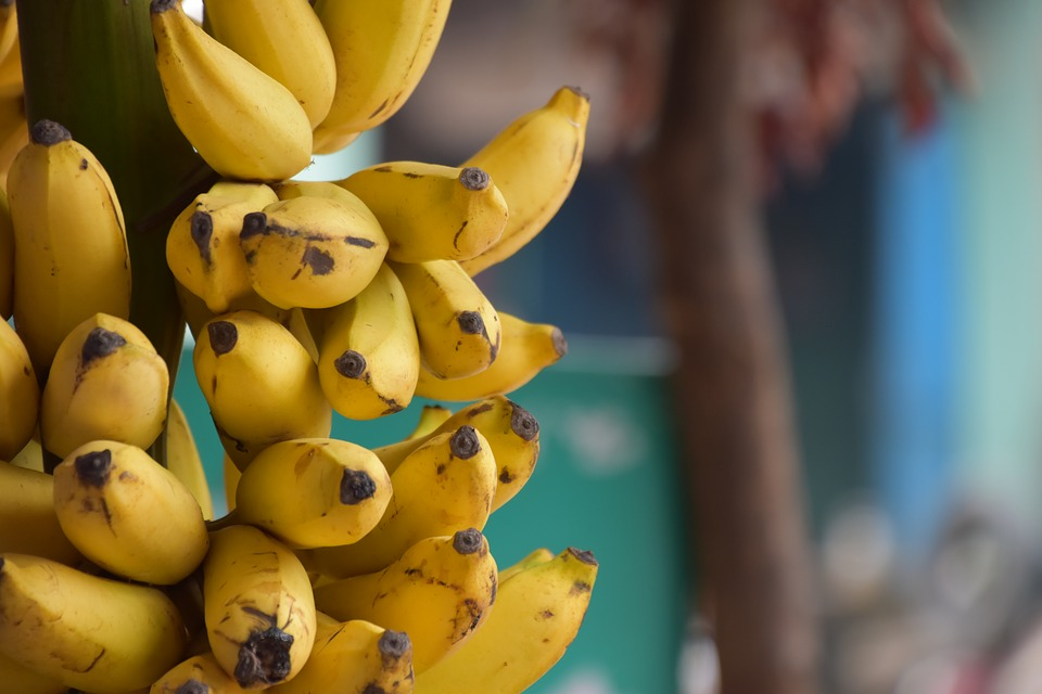Ripe bananas per day
