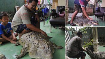 Crocodile-Pet