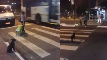 Smart-Dog-Crosses-the-Streets