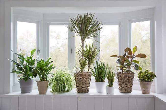 Houseplants to help fight back anxiety